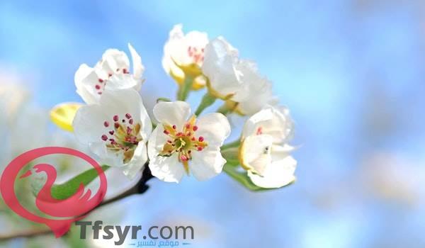 موضوع تعبير عن الربيع بالعناصر
