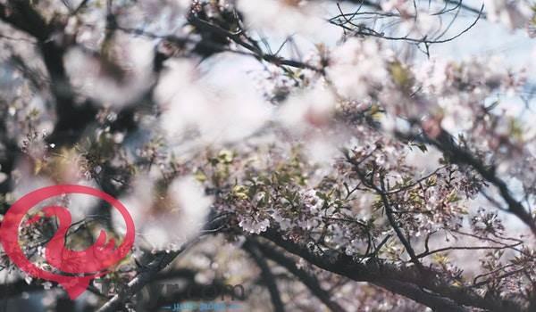 موضوع تعبير عن الربيع فصل الجمال والبهجة بالعناصر