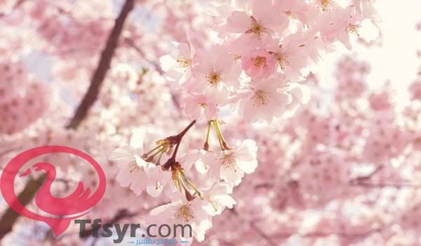موضوع تعبير عن الربيع للصف الثانى الاعدادى