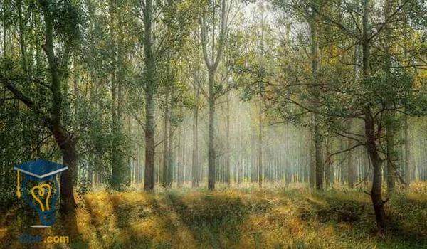 موضوع تعبير عن الحدائق والمساحات الخضراء