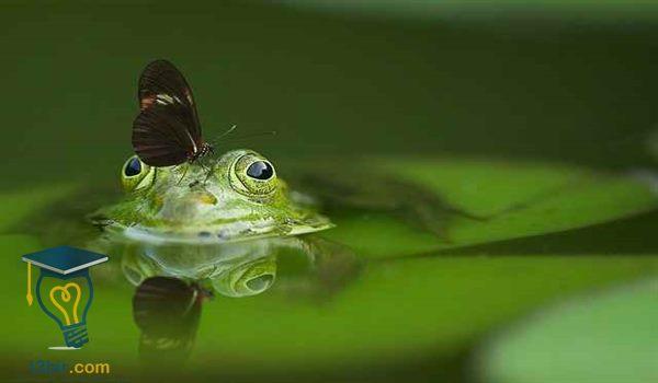 بحث حول الماء في الطبيعة