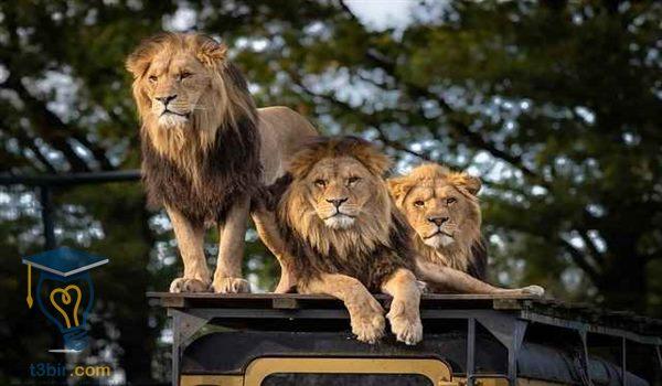 تعبير عن رحله مع عائلتي الى حديقة الحيوانات
