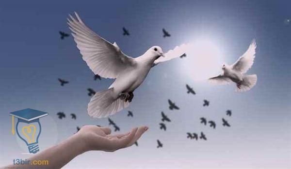 موضوع تعبير عن السلام بالعناصر والاستشهادات 2020