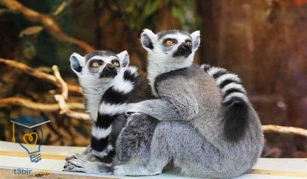 موضوع تعبير عن رحلة مدرسية الى حديقة الحيوان