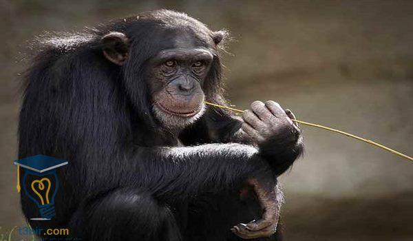 موضوع تعبير عن درس عالم الحيوان