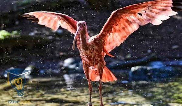 موضوع تعبير عن عجائب عالم الحيوان