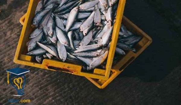 بحث عن الاسماك ثاني ثانوي