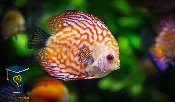 بحث عن كيف تتنفس الاسماك