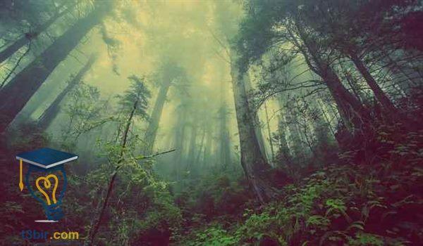 بحث عن علم البيئة المجتمعات الحيوية